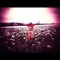 Running free in a Pink Poppy Field!