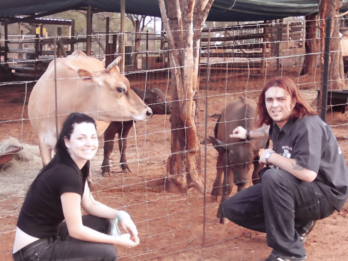 Seether wallpaper with a dairy cattle entitled Shaun Morgan and Amy Lee <3