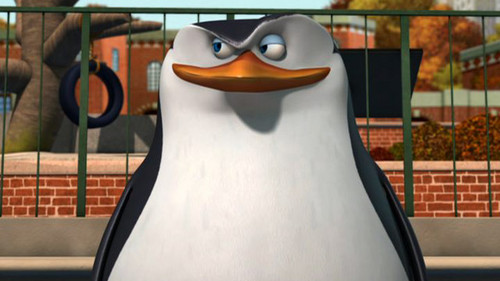 Skipper: The penguins of madagascar wallpaper titled Some pictures of Skipper