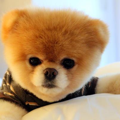 Sweet Boo :)