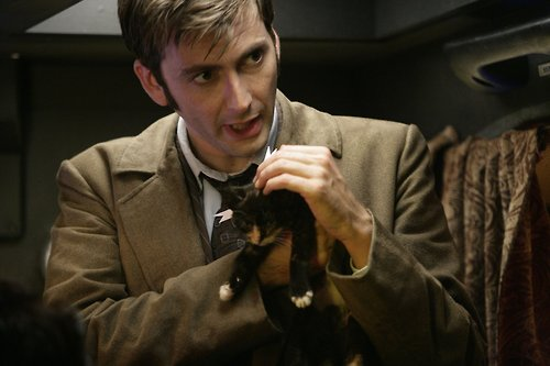 The Tenth Doctor wallpaper probably with a miniature pinscher, a doberman, and a manchester terrier called The Doctor