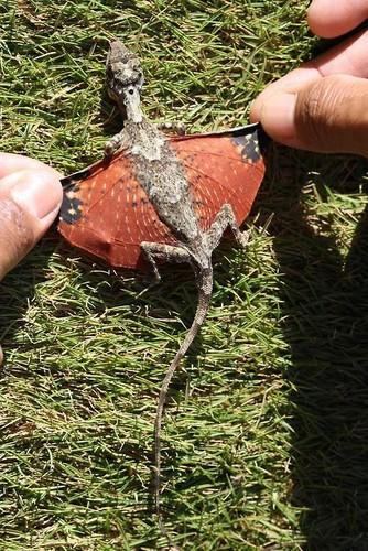 Tiny Dragon 1