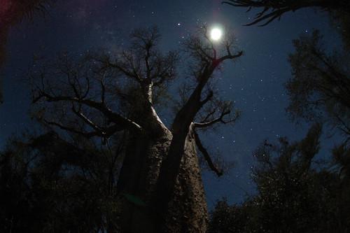 дерево at Night