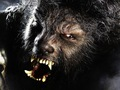 Werewolf - werewolves photo