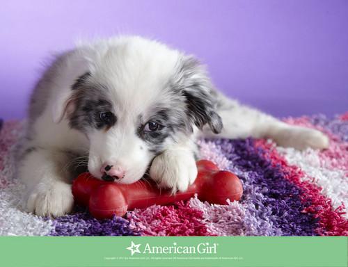 Cute chó con hình nền entitled awwwwwwww