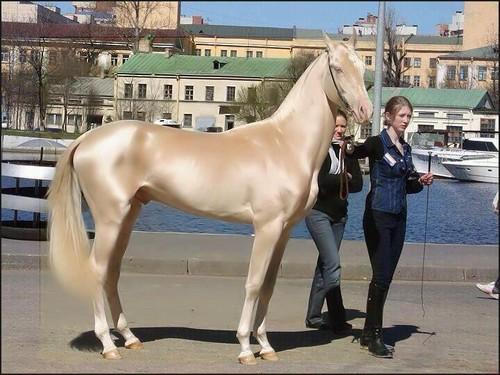 beautisul horse