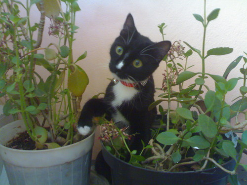 cat that loves flowers
