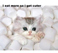 cute kitten in marshmallows - cute-kittens photo