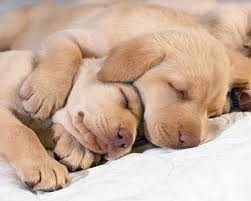 cute sleeping dogs - dogs Photo