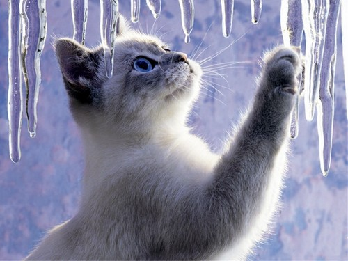 ice cat - cats Photo