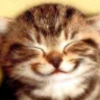 kitty smile - cats Icon