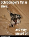 lol cats - lol-cats photo
