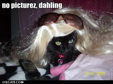 LOL Katzen