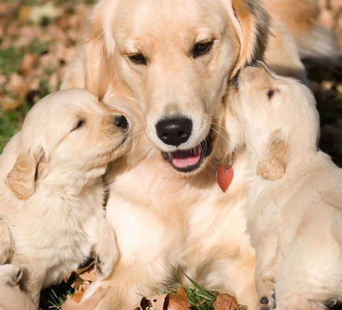 mother and her puppies!!!