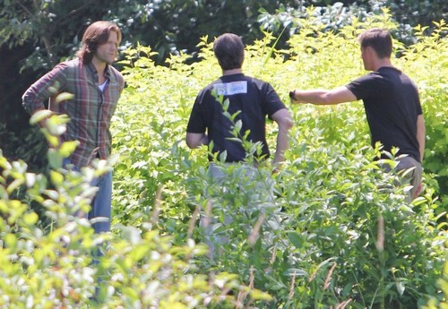 supernatural fondo de pantalla containing western mugwort, a spurge, and common ragweed entitled on set of supernatural S8