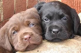 cún yêu, con chó con twins