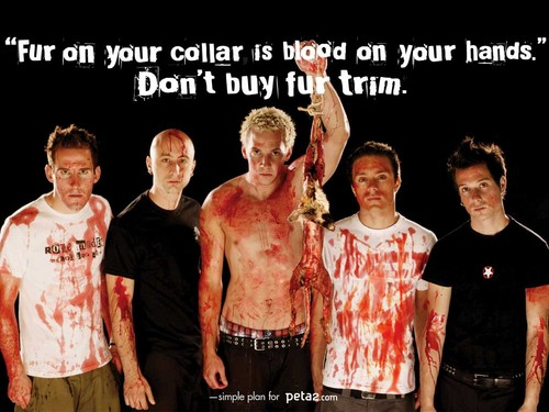 simple plan-dont buy lông, lông thú coats