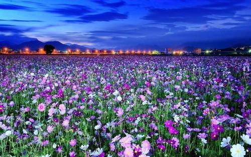 spring fiori