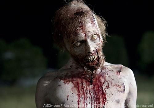 Walking Dead fond d'écran titled twd