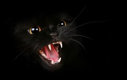 black gatos wallpaper called Black Cat