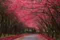Blossoms:D
