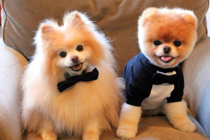 Boo & Buddy - New Style