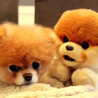 Boo with Boo plush! :)