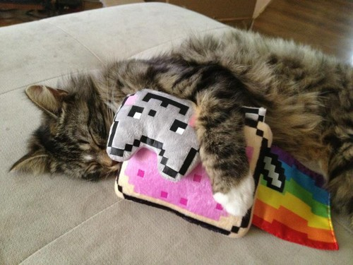 Cat Hugs Nyan Cat - nyan-cat Photo