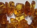 Collection of Amber Fossils