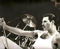 Freddie in action !