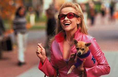 Legally Blonde wallpaper possibly containing a chihuahua and a rat terrier called Legally Blonde