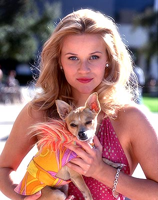 Legally Blonde wallpaper with a chihuahua titled Legally Blonde