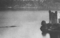 Nessie - cryptozoology photo