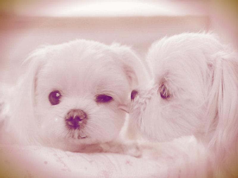 Puppie ~