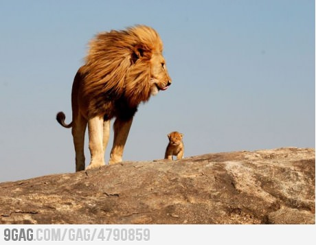 The Lion King is REAL!