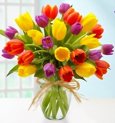 flowers images tulips wallpaper and background photos, Beautiful flower