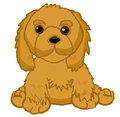 cocker spaniel - webkinz photo