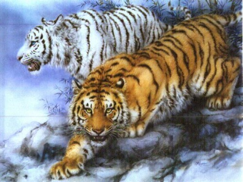 Animals wallpaper containing a tiger cub, a bengal tiger, and a tiger entitled cool tigers