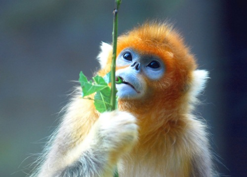 cute little monkey:)