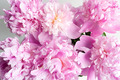 flowers - pink-color photo