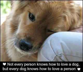 tình yêu a dog ♥
