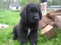 my puppy blu