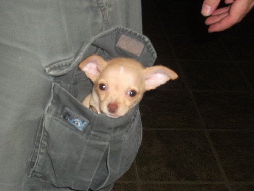 chiot in a pocket!