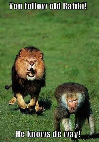 real lion king
