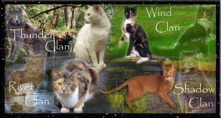 warrior cats wallpaper clans