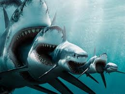 this has nothing to do with heros of olympus(i like sharks)