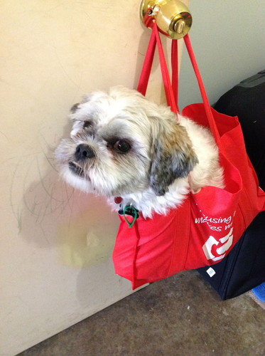 toto in a bag - dogs Photo