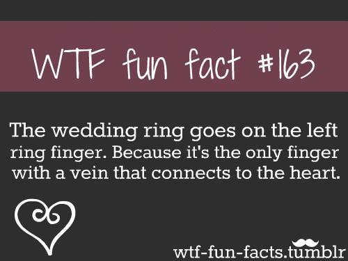 tumblr facts