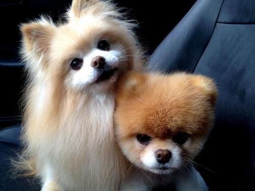 Boo & Buddy!!! <333