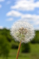 Dandelion in the sky - photography photo